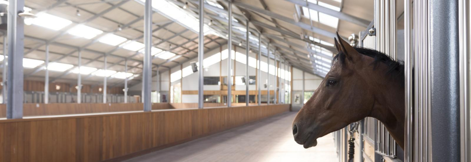 Manege VMF Stables